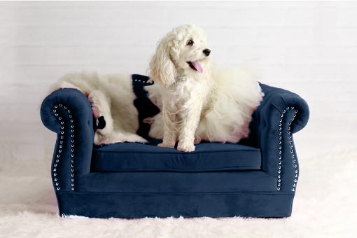 Blue dog-sized sofa with a white dog on it. Sofa has rolled arms and nailhead trim