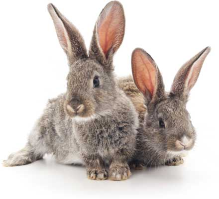 Two very adorable young bunnies